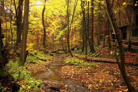 Autumn scene at the forest photo