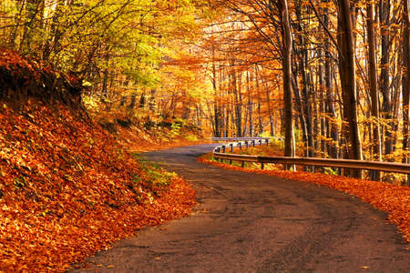 walking paths: Autumn scene at the forest Stock Photo