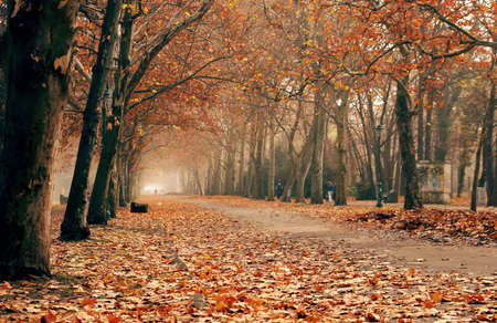 autumn in the park Stock Photo - 6244663