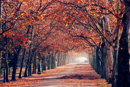 autumn in the park Stock Photo - 5867242
