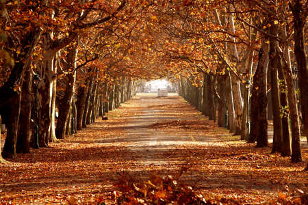 and hiking path: autumn in the park