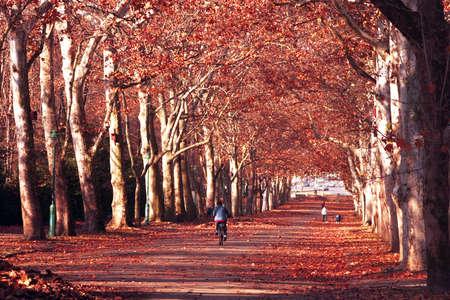 autumn in the park Stock Photo - 5867254