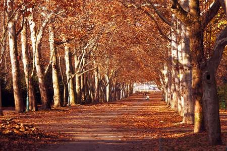autumn in the park Stock Photo - 5867256