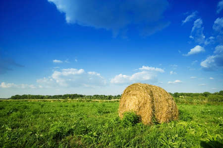 wheat field in summer Stock Photo - 5897273