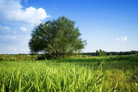 tree in the rural Stock Photo - 5897282