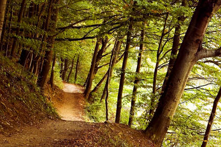green forest in summer photo
