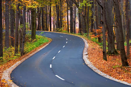 road autumnal: The road through the autumnal park Stock Photo
