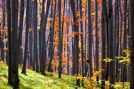 Forest in autumn photo