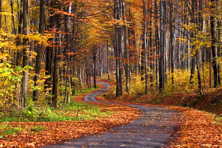 autumn path: Forest in autumn