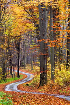 walking paths: Forest in autumn