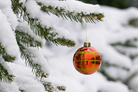 Christmas decorating bulbs and a snowy branch Stock Photo - 6576334