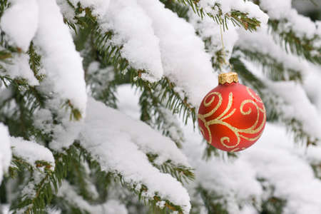 Christmas decorating bulbs and a snowy branch photo