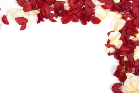 Red rose petals Stock Photo - 6577314