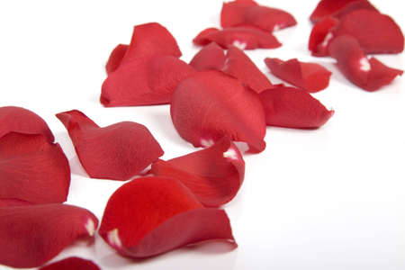 scattered on white background: Red rose petals  Stock Photo