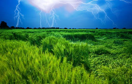 Storm over wheat field Stock Photo - 6737556