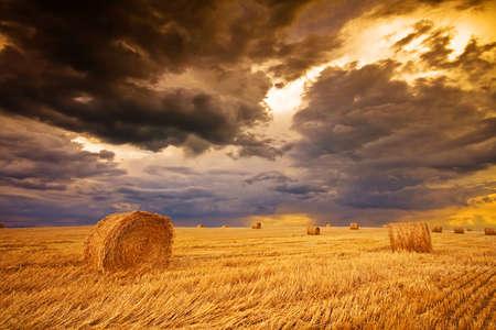 cebada: campo con balas de heno  Foto de archivo