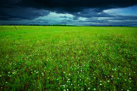 Green field in summer Stock Photo - 6831767