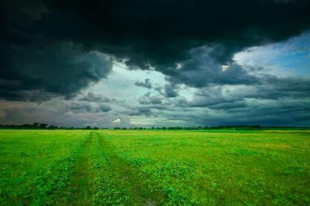 Green field in summer Stock Photo - 6831792