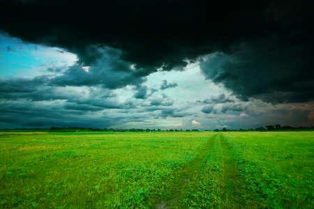 Green field in summer Stock Photo - 6831674