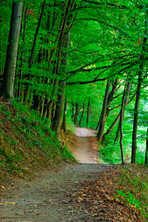 park path: green forest  Stock Photo