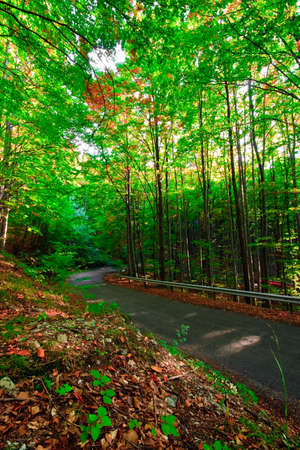 road in the green forest photo