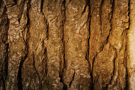 Texture of a tree bark