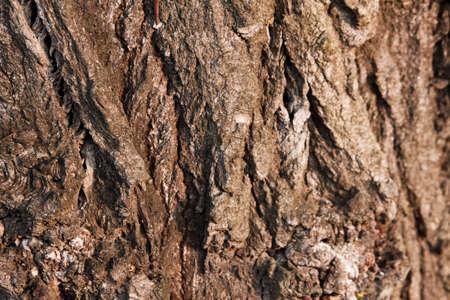 Texture of a tree bark Stock Photo - 6935271