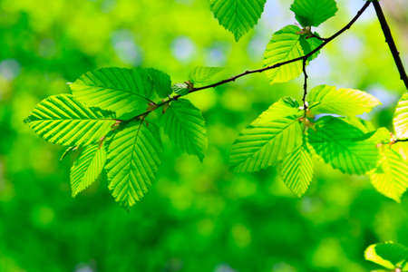 Green leaves Stock Photo - 6937863