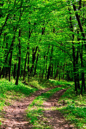 green forest  photo