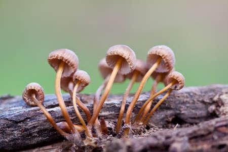 Mushrooms Stock Photo - 6937867