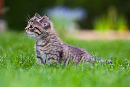 little kitten playing on the grass  Stock Photo - 7067181