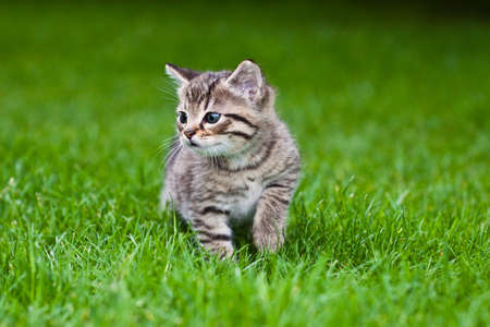 little kitten playing on the grass Stock Photo - 7067336