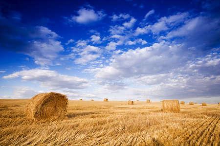 Farmers field full of hay bales  photo