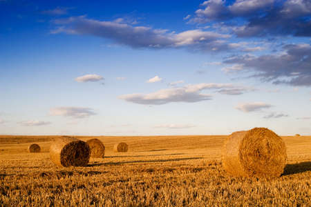 Farmers field full of hay bales  photo