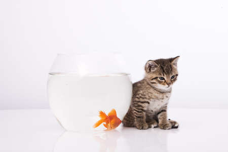 Home cat and a gold fish Stock Photo - 7243033