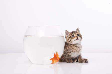 Home cat and a gold fish Stock Photo - 7243021
