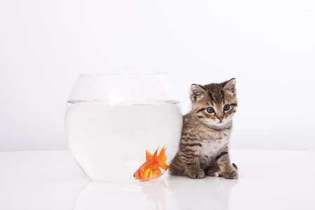 Home cat and a gold fish Stock Photo - 7243027