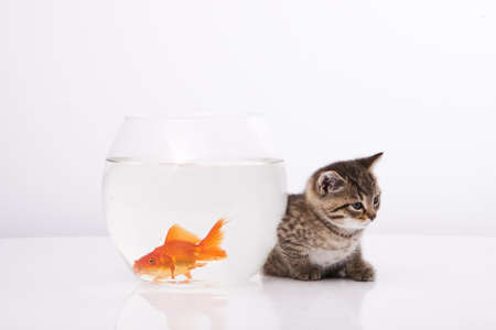 Home cat and a gold fish  Stock Photo - 7243023