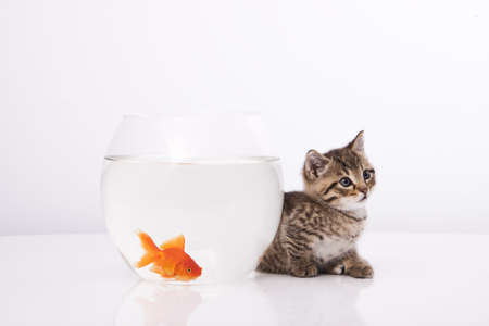 Home cat and a gold fish Stock Photo - 7242961