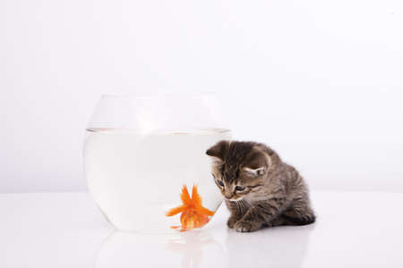 Home cat and a gold fish  Stock Photo - 7242958