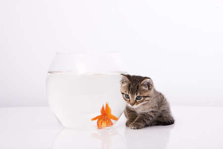 Home cat and a gold fish  Stock Photo - 7242955