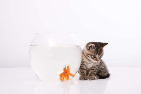Home cat and a gold fish Stock Photo - 7242959