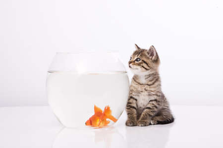 Home cat and a gold fish  Stock Photo - 7243035