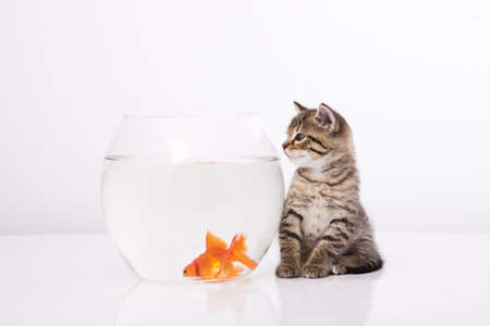 Home cat and a gold fish Stock Photo - 7243034
