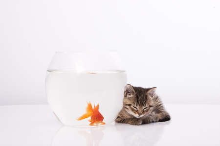 Home cat and a gold fish  Stock Photo - 7242949