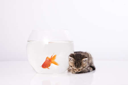 Home cat and a gold fish  Stock Photo - 7242944