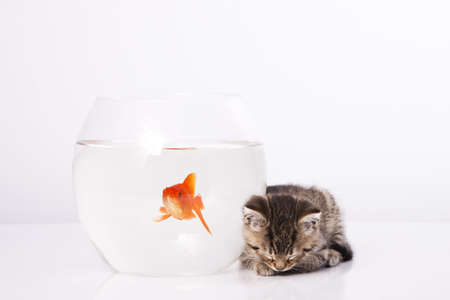Home cat and a gold fish  Stock Photo - 7242957