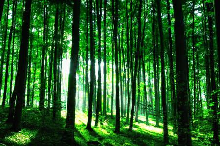 houtsoorten: Sunshine in het groene bos