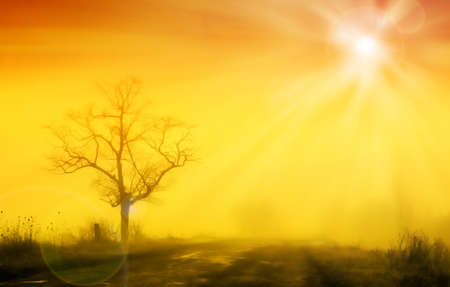 Misty sunrise with lonely tree in fog Stock Photo - 8752263