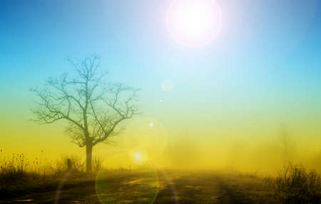 Misty sunrise with lonely tree in fog Stock Photo